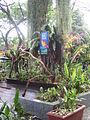 Jurong BirdPark 139.JPG