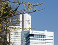 Köln Germany Catkins-at-TUV-Rheinland-Headquarters-01.jpg
