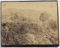 KITLV - 16048 - Junghuhn, Franz Wilhelm (1809-1864) - Cinchona plantation at Lembang near Bandung - circa 1860.tif