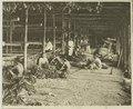 KITLV - 26863 - Kleingrothe, C.J. - Medan - Bundling tobacco in a drying barn, Deli - circa 1905.tif