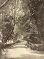 KITLV - 79917 - Kleingrothe, C.J. - Medan - Road to the botanical gardens of Singapore, probably Orchard Road - circa 1910.tif