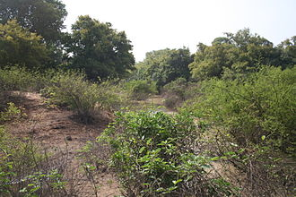 Kaboré Tambi National Park - View of the Red Volta in Kaboré Tambi National Park