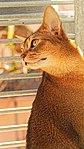 Katzentür 18.jpg