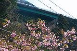 Kawadu loop bridge 河津ループ橋 (2304090110).jpg