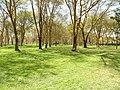 Kenya 2013. Lake Naivasha. - panoramio (34).jpg