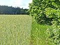 Kerzendorf - Feldrand (Field Edge) - geo.hlipp.de - 37956.jpg