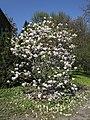 Kharkiv Botanical Garden on Klochkivska Street 06.jpg
