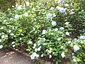Kobe Municipal Arboretum in 2013-6-22 No,43.JPG