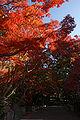 Kobe Suma Rikyu Park05n4592.jpg