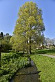 L'arbre majestueux (28086753335).jpg