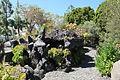 La Palma - Los Llanos - Carretera a Puerto Naos - Parque Antonio Gómez Felipe (Morera) 19 ies.jpg