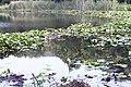 Lago nel Cratere degli Astroni.jpg