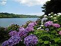 Lake Osumi June 2015.JPG
