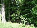 Landschaftsschutzgebiet Waldgebiet bei Neuenkirchen Melle, in Straßenmitte - Datei 4.jpg