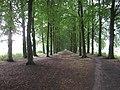 Lanenstructuur De Harscamp (30905262860).jpg