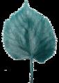 Leafblue3.png