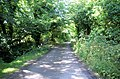 Leafy Lane below Treworthen Farm - geograph.org.uk - 905104.jpg