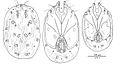 Lebertia martini - ZooKeys-238-023-g001.jpeg