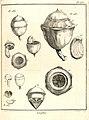 Lecythis grandiflora Aublet 1775 pl 285.jpg
