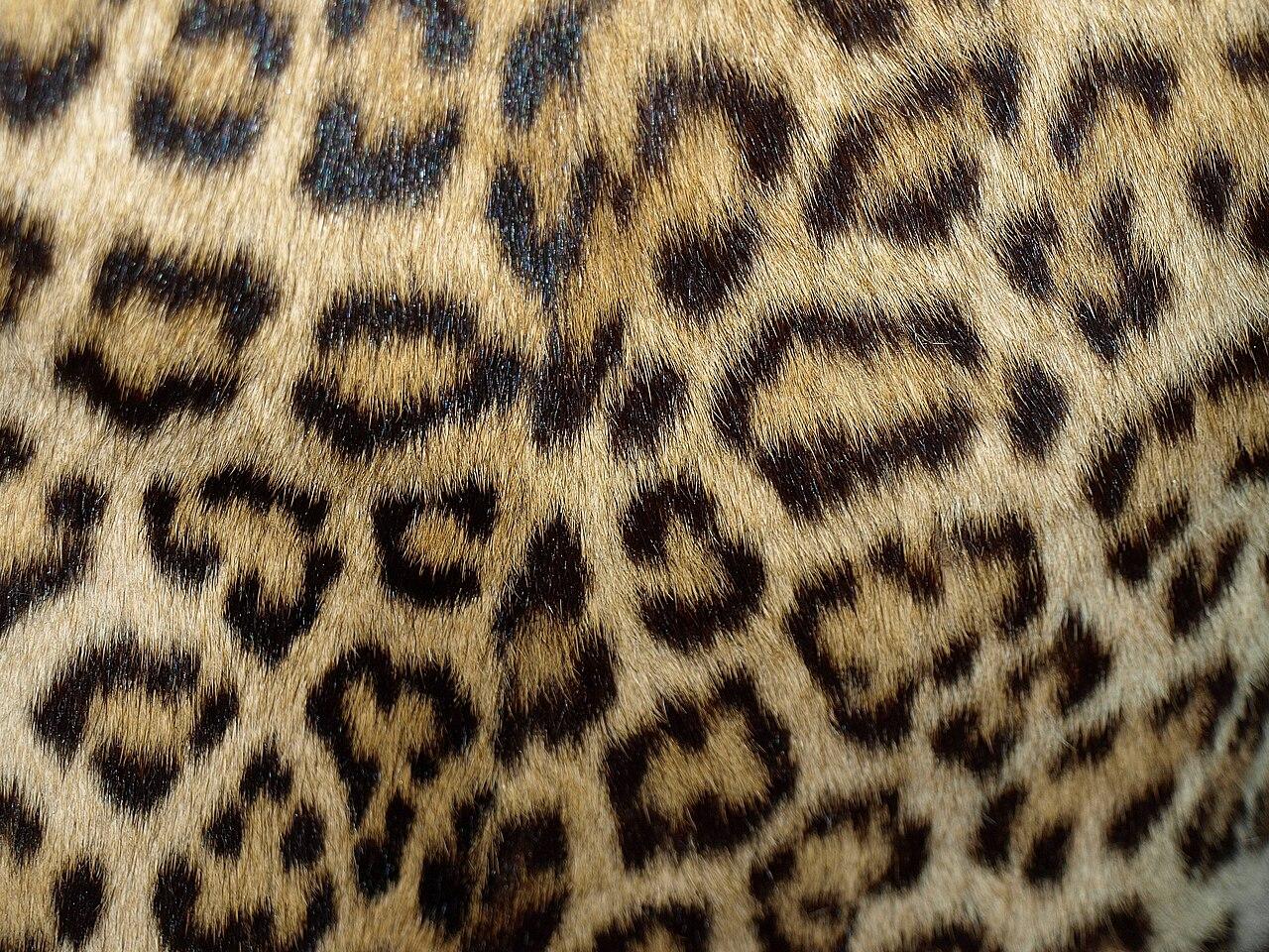 Black Cheetah Print Running Shoes