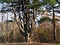 """Limba - """"Lubovnianske kupele"""" - panoramio.jpg"""