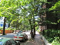 Linnaean St, Cambridge MA.jpg