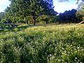 Ljeto - panoramio.jpg