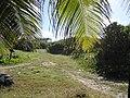 Long Beach - Tinian - panoramio (8).jpg