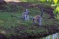 MG-naturpark-lemuren-2.jpg