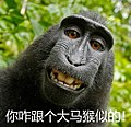 Macaca nigra self-portrait, meme about Provincial Quality Examination of Fujian, 2018.jpg