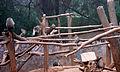Macaca radiata (common Indian monkey) at IG Zoological park in Visakhapatnam 03.JPG