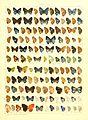 Macrolepidoptera15seit 0343.jpg