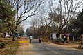 Main Road - Tikka Area - Indian Institute of Technology Campus - Kharagpur - West Midnapore 2015-01-24 4841.JPG