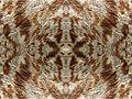 Mangifera indica20100320 04 pattern.jpg