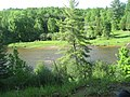 Manistee River Trail - panoramio (1).jpg