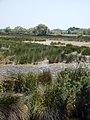 Marais en Camargue.jpg