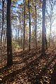 Mark Twain National Forest (30727334492).jpg