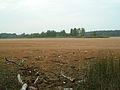 Mazurinskoe lake 2010.jpg