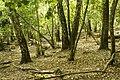 Mežs - panoramio (6).jpg