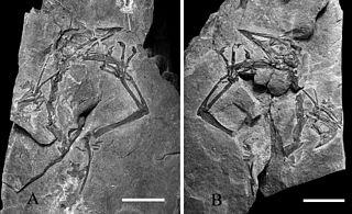 <i>Megalancosaurus</i> genus of reptiles (fossil)