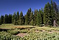 Mill Creek, meadow, Ochoco National Forest (36197432100).jpg