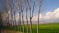 Mingora, Swat Valley Pakistan.jpg