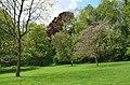 Monceau-sur-Sambre - parc - 2019-05-12 - 07.jpg