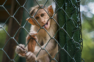 Guindy National Park - Monkey at Children's park/Guindy National Park, Chennai.