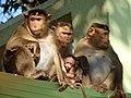 Monkeys 05.jpg