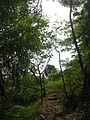 Moorea Trail to Belvedere Lookout.jpg