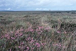 Bellacorick - Moorland near Bellacorick