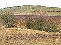 Moorland near Culvennan Fell - geograph.org.uk - 163208.jpg