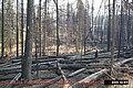 Moose Fire, Glacier National Park, Suppressed Using Minimum Impact Management Tactics in September 2001 (d59c947c-57f9-425d-9650-a34c14d487cb).jpg