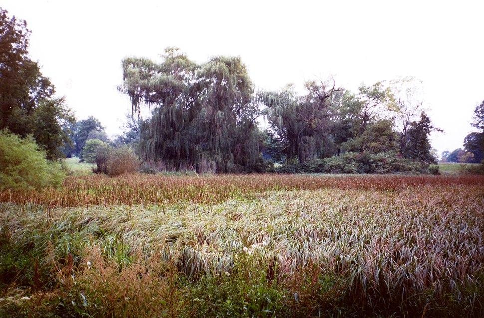 Morton Arboretum grassland